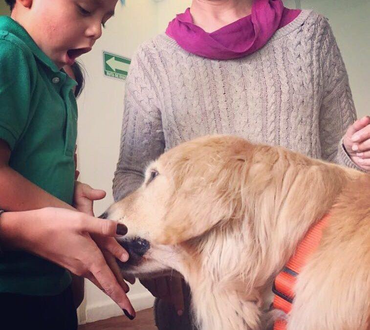 ¿Qué es un perro de terapia y por qué puede ser tan efectivo con los niños?